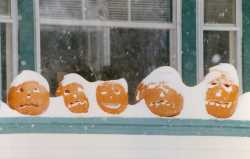 Color image of Jack-o'-lanterns covered in snow during the Halloween Blizzard, 1991. Photograph by Richard Sennott, RPA, Minneapolis Star Tribune.