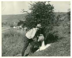 A worker pours salt on a barberry bush in Minnesota, ca. 1925. Applying salt to kill a bush's roots was the main method of destroying them before the widespread use of herbicides in the 1950s.