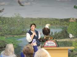 Color image of a National Eagle Center employee shows a bald eagle to visitors during a 2015 educational program.