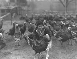 Black and white photograph of a woman and turkeys, ca. 1930. Photograph by Minneapolis Star Journal Tribune.
