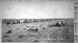 Wheat harvest at G.S. Barnes and Company farm