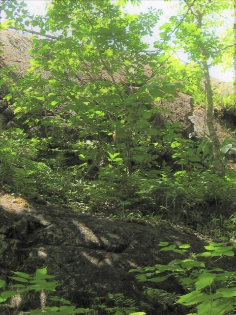 Rocky outcrop inside Franz Jevne State Park