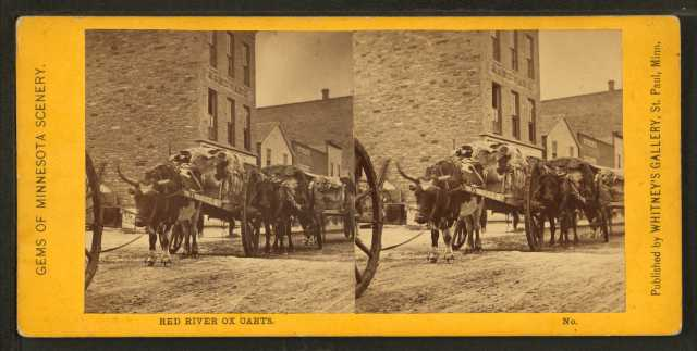 Black and white photograph of Red River carts, 1862–1875. Photograph by Whitney's Gallery.