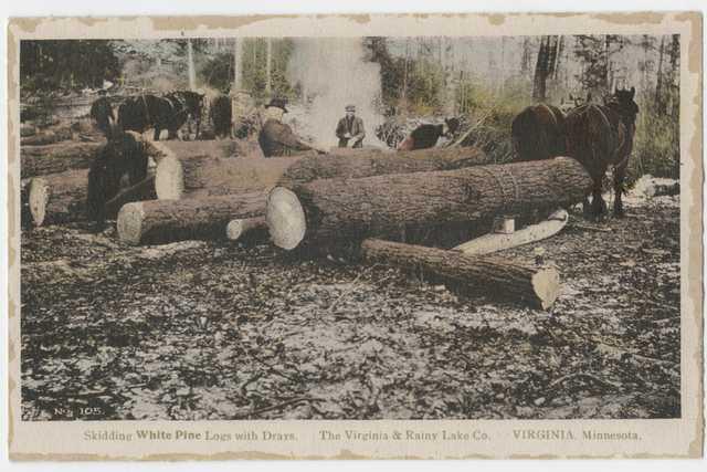 Skidding white pine logs with drays. Virginia and Rainy Lake County, Virginia, Minnesota, ca. 1928.