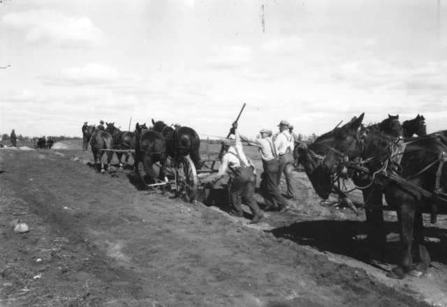 Black and white photograph of a Federal Emergency Relief Administration farm to market road construction project near Alexandria, 1936.
