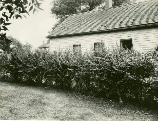 Planted barberry bushes displayed as ornamentals around a home in Minnesota, ca. 1918.