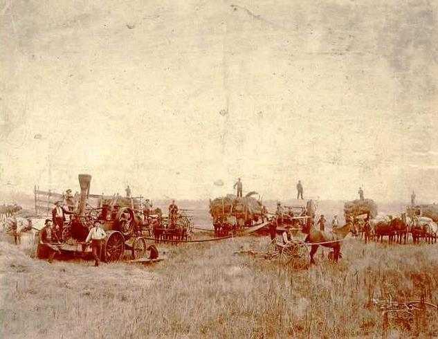 Black and white photograph of unidentified men in field with farm machinery, James J. Hill's Northcote Farm, Northcote, Minnesota, undated.