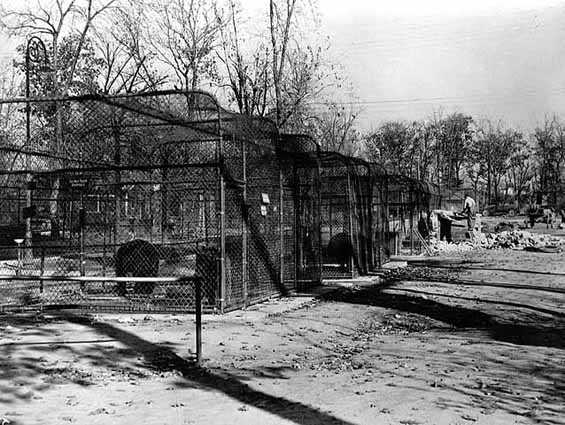 Animal cages at Como Zoo