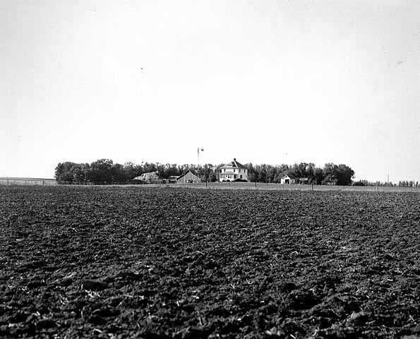 Black and white photograph of a farm in windbreak near Lamberton, Redwood County, 1936. Photograph by Napoleon Noel Nadeau.