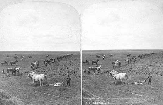 Black and white photograph of a team breaking ground along the line of the Northern Pacific Railroad at Dalrymple Farm, twenty miles west of Fargo, 1878. Photograph by Frank Jay Haynes.