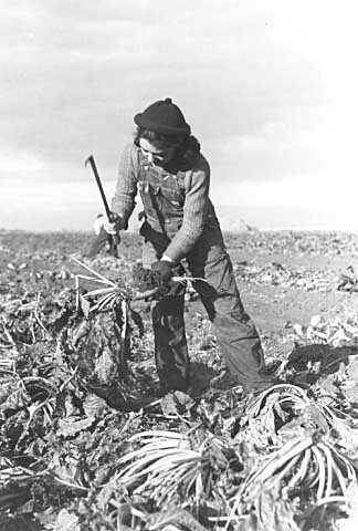 Black and white photograph of a Sugar beet worker near Fisher, Minnesota, photographed by Russell Lee in October 1937.