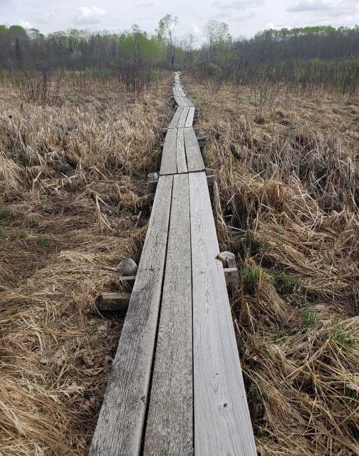 A Savanna Portage boardwalk installed to help travelers traverse a swamp, 2018. Photograph by Jon Lurie; used with the permission of Jon Lurie.