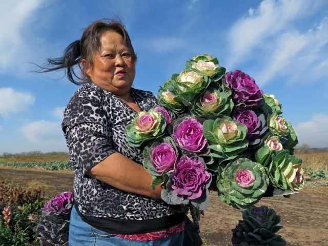 Xee Yang harvesting kale flowers