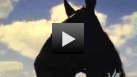 Dan Patch Video