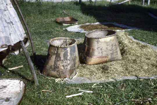 Drying wild rice at Nett Lake