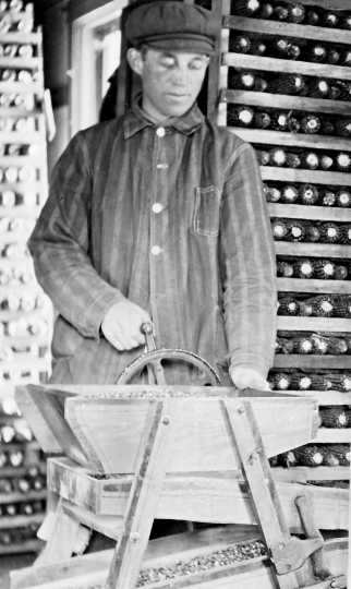 Black and white photograph of Martin Carlsted turning the handle of a manual corn grader to grade and separate different sizes and shapes of kernels, c.1910.