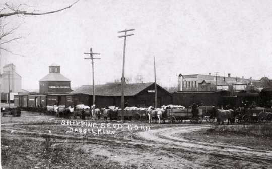 Black and white photograph of horse-drawn wagons hauling bags of seed corn to a railroad station for further transporting, c.1907.