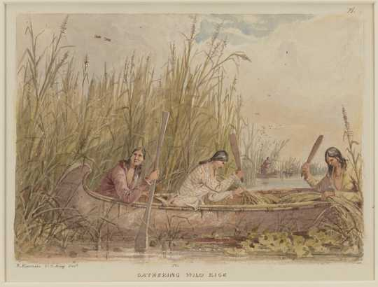 Color image of American Indian women gathering rice, 1849–1855. Drawing by Seth Eastman.