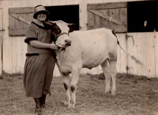 Black and white photograph of a 4-H Club exhibitor with a dairy steer at the Murray County Fair, ca. 1920s.