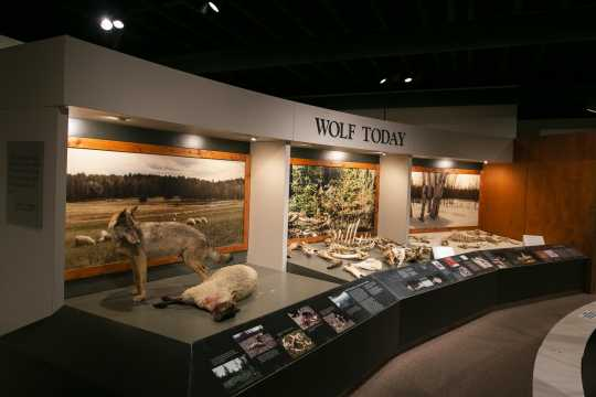 Exhibit at the International Wolf Center