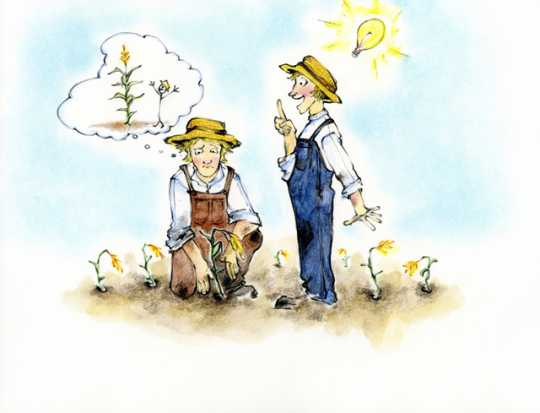 Drawing of two individuals contemplating how to grow corn in Minnesota's cold climate.
