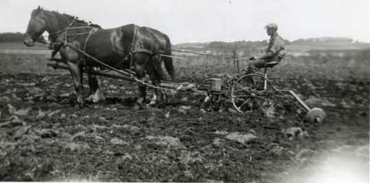 Black and white photograph of an individual using a horse drawn planter to plant seed corn, c.1905.