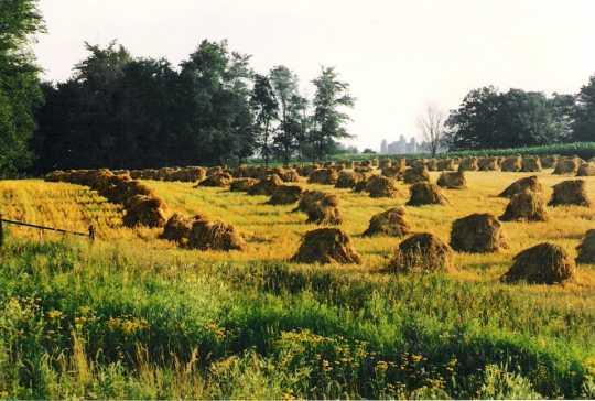 Amish Field