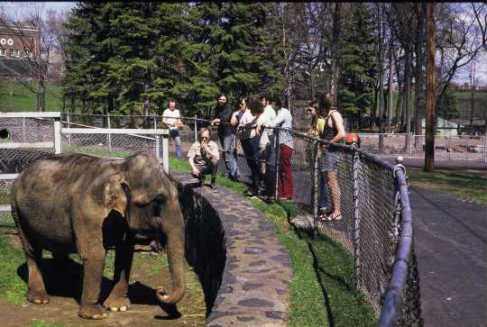 Photograph of Bessie the elephant at the Lake Superior Zoo, 1974.