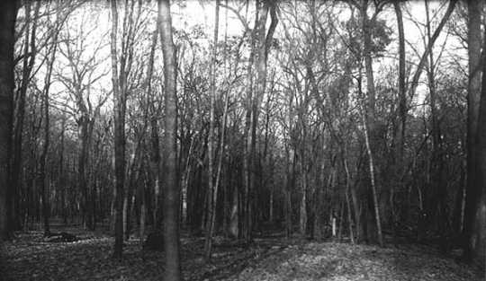 Woods, one-half mile southeast of Norwood