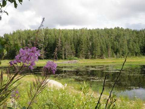 Color image of the central beaver wetland complex in Lake Vermilion–Soudan Underground Mine State Park. Photograph by Minnesota Department of Natural Resources Staff, August 1, 2010.