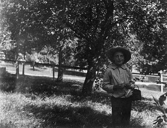 Black and white photograph of Lewis Merrill in the apple orchard on the Merrill's property, 1898.