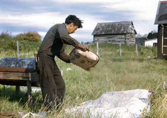 Jim Drift winnowing wild rice at Nett Lake