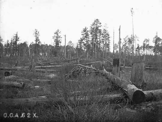 Slash in a Minnesota forest, ca. 1905. Slash is the debris that remains in an area after it has been logged. Forms part of C. C. Andrews photograph collection (I.99).