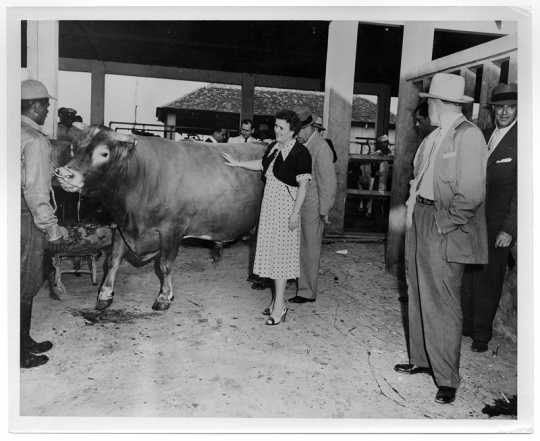 Photograph of Coya Knutson and a cow