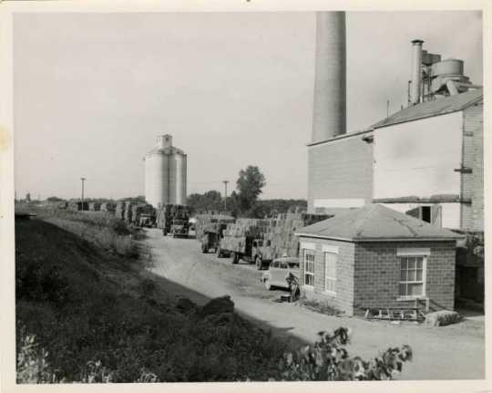 Schweitzer Flax Plant, ca. 1950