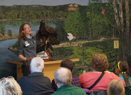 "Color image of Donald, a male golden eagle and National Eagle Center ambassador, participating in the center's ""Meet the Eagles"" program."