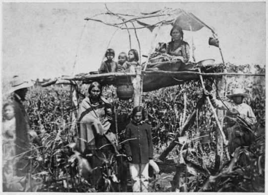 Black-and-white photograph of Dakota women and children guarding corn from blackbirds, August 1862.