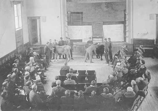 Black and white photograph of a class livestock judging, University of Minnesota, College of Agriculture, St. Paul, ca. 1910.