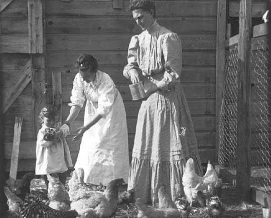 Women and child feeding chickens