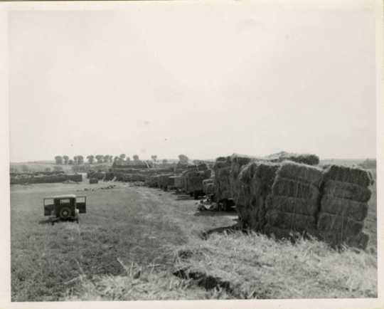 Stacked Flax Bales, 1950
