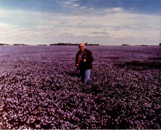 Carl Schneider in flax field, 1970.