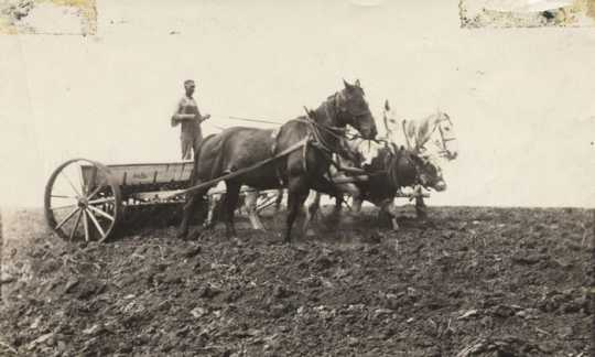 Black and white photograph of Frank Schott drilling grain, c.1920s.