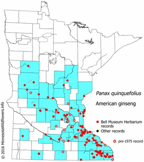 This map shows where ginseng is found within the state. The data were gathered from Bell Museum Herbarium records.