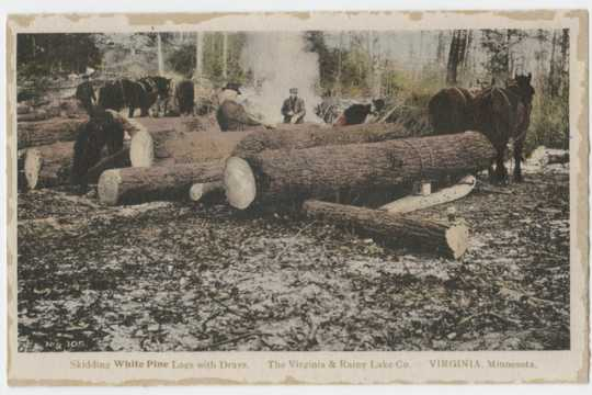 Skidding white pine logs with drays. Virginia and Rainy Lake County, Virginia, Minnesota, ca. 1928.