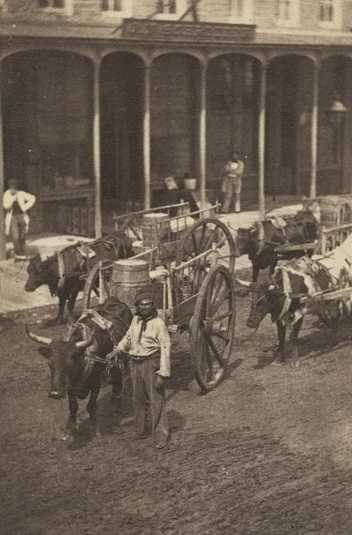 Black and white photograph of a man and a Red River cart train, ca. 1859. Photograph by Martin's Gallery.