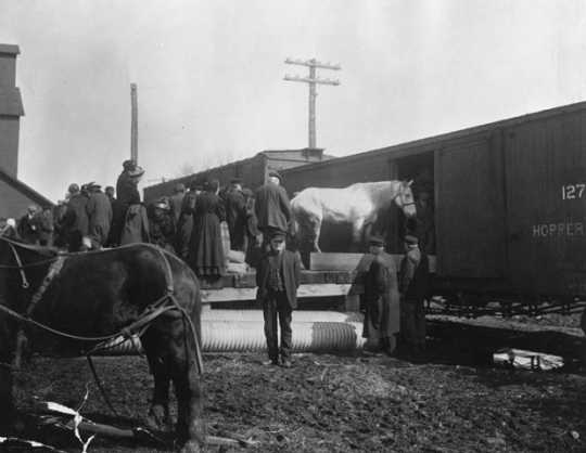 Black and white photopgrah of people loading horse and possessions of homesteaders into Great Northern Railway boxcar, date unknown.