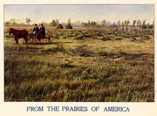 Color illustration of a field of wire grass during harvest time c.1901.