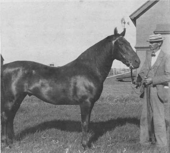 Black and white photograph of Northwest Experiment Station's first superintendent, Torger Hoverstad, standing with one of the Experiment Station horses.