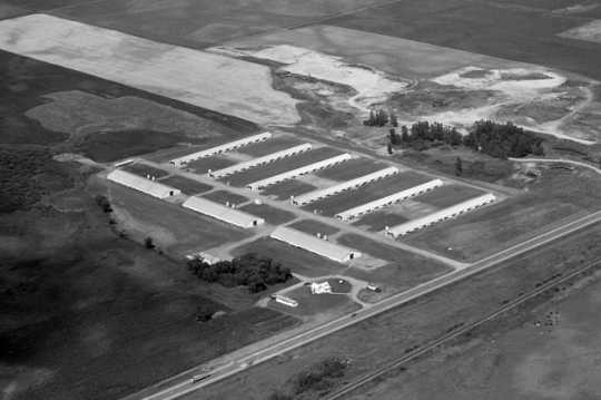 Black and white photograph of a turkey farm, Atwater, 1973. Photograph by Vincent H. Mart.