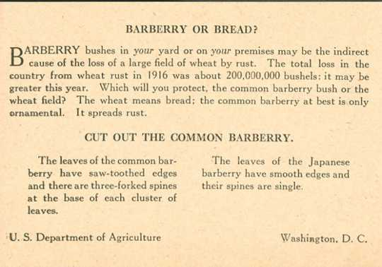 Informational circular to promote destruction of barberry bushes, ca. 1920s.